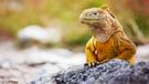 Rozmanitá fauna Galapág fakultatívne