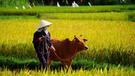 Zájezd Vietnam pro každého