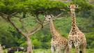 Zájazd safari Tanzánie a kúzlo Zanzibaru luxusnejšie