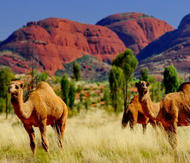Červený stred Austrálie