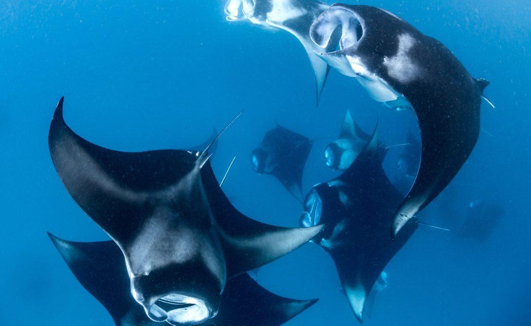 Zájazd potápanie na Bali so zážitkovým programom