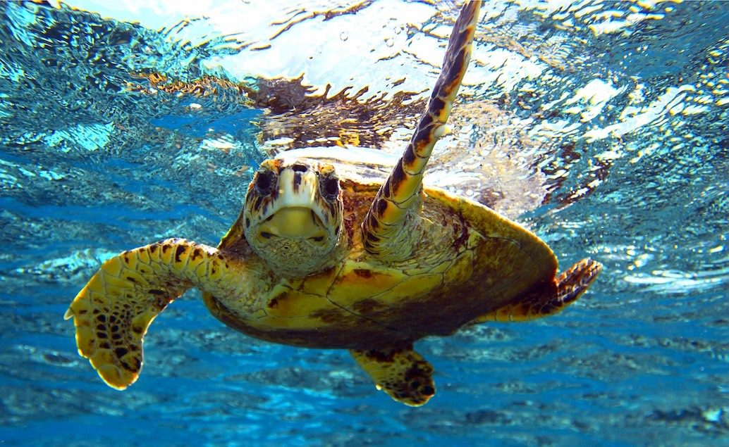 Fidži - pláže Pacifických ostrovov
