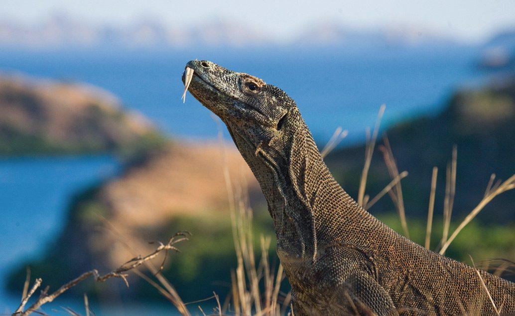 Zájazd príroda Floresu, komodský drak a mystické Bali