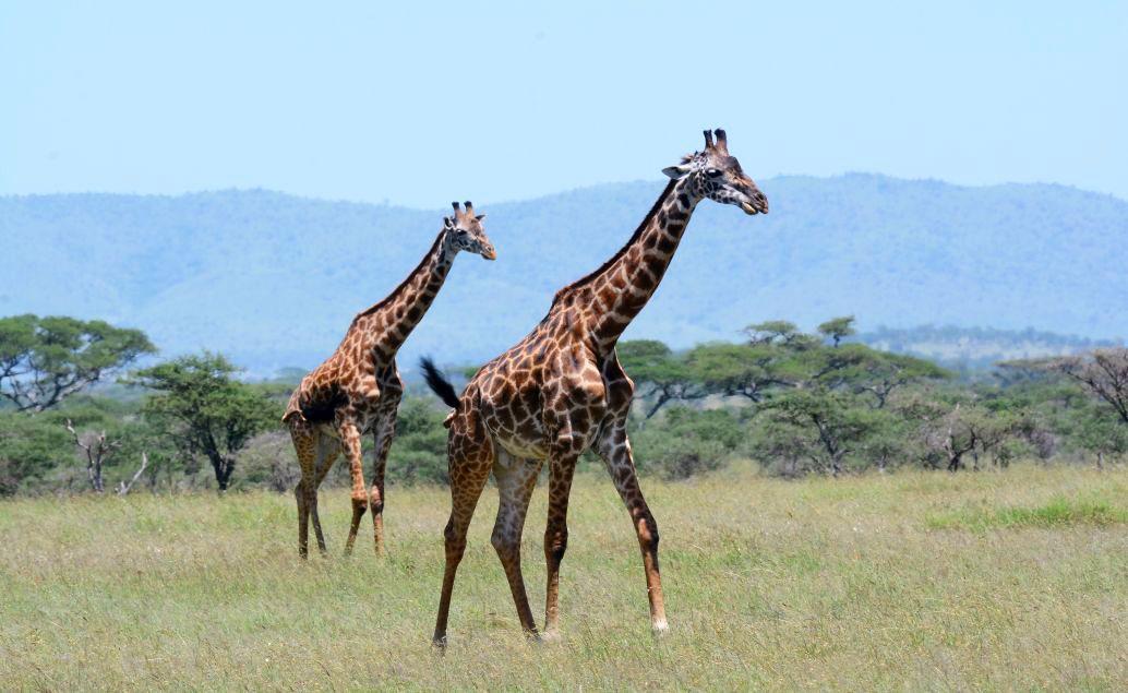 Zájazd Tanzánia - veľká päťka na safari a výstup na Mt. Meru