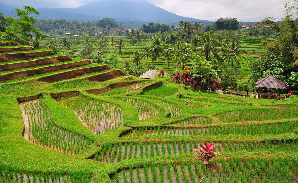 Zájazd joga na Bali s Olgou Šnapkovou