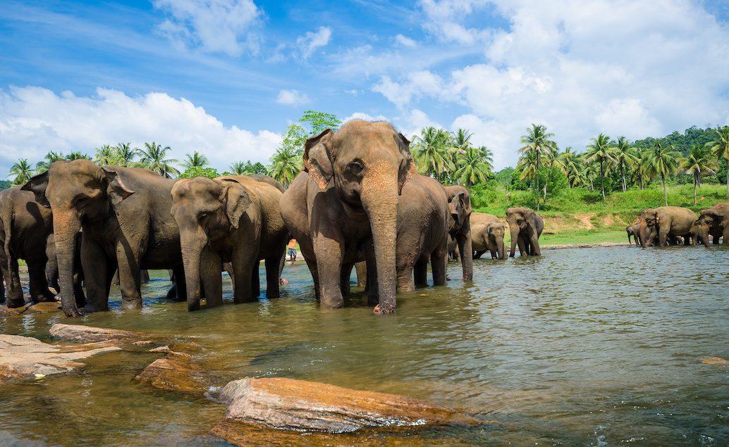 Zájazd kúzlo Srí Lanky, Maledivy a Dubaj