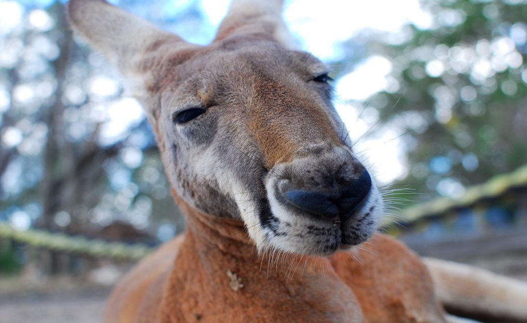 Zájazd príroda Austrálie a Fiji