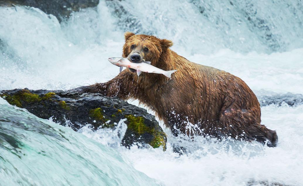 ALJAŠKA - výprava divokou prírodou so sprievodcom