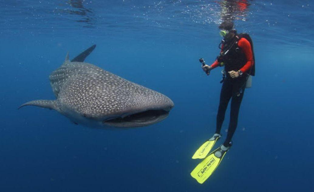 Výlet za žralokom veľrybím