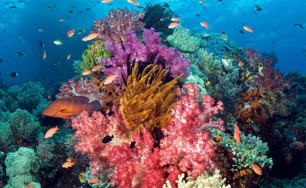 Výlet za žralokom veľrybím a krásy podmorského sveta Sulawesi