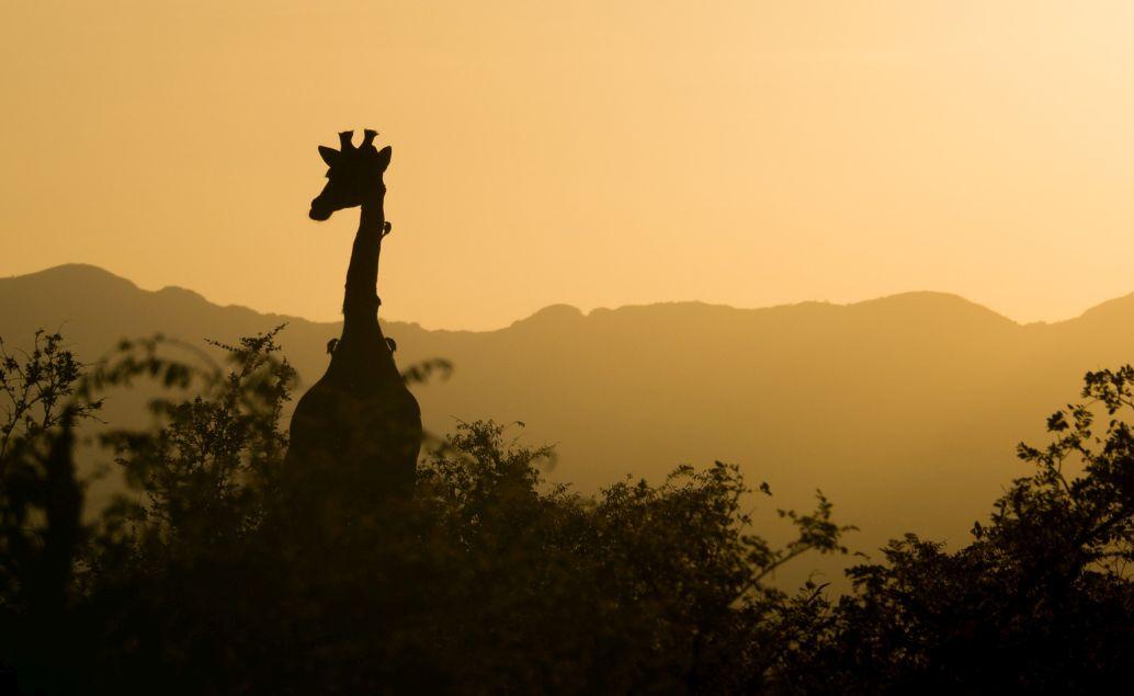 Zájazd 3 denné safari v luxusných safari stanoch