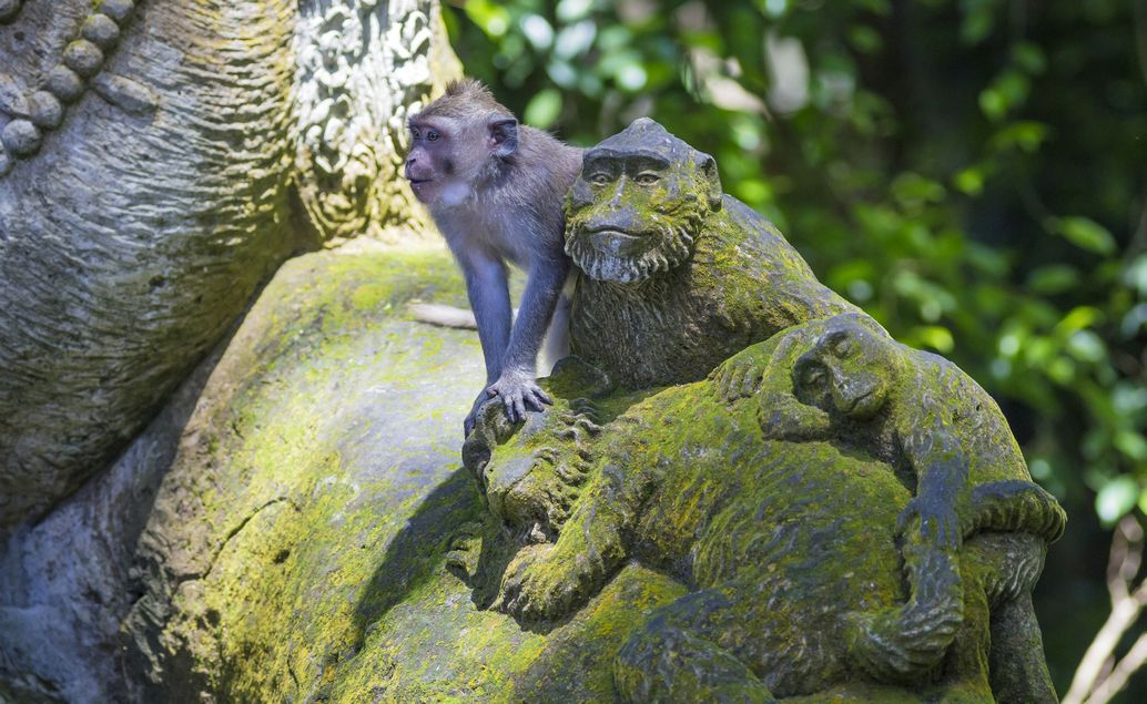 Zájezd kombinace Bali a Austrálie
