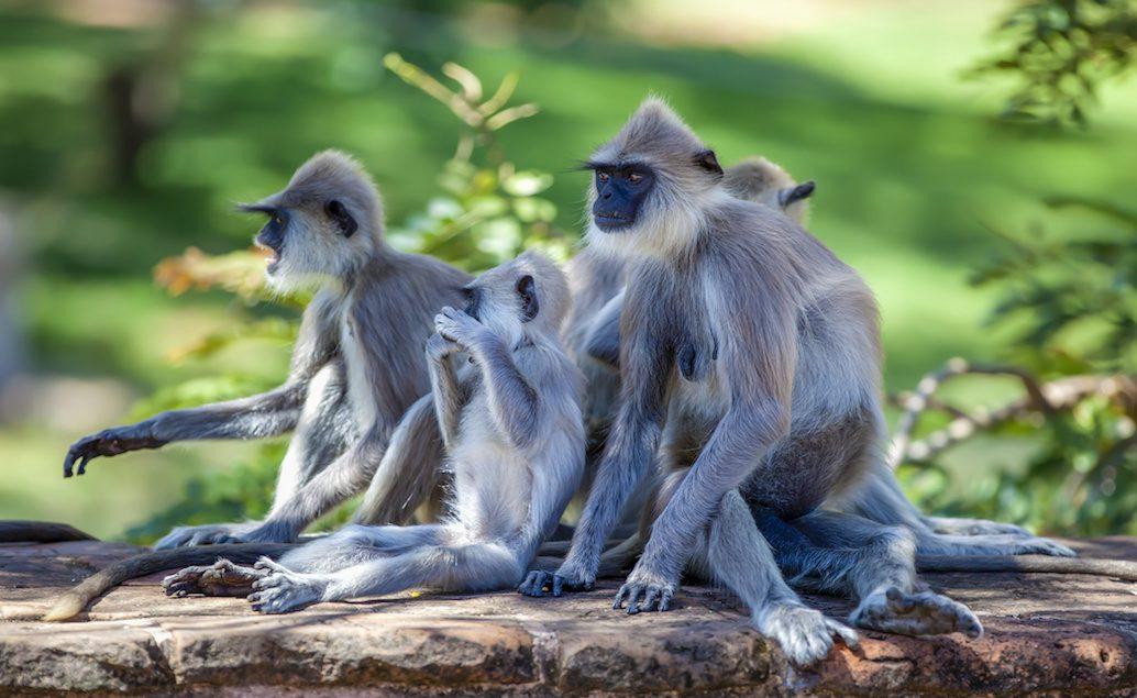 Zájazd Srí Lanka všetkými zmyslami