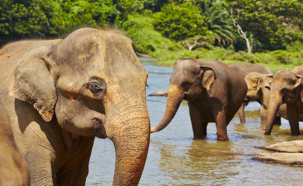 Jóga na ostrove Srí Lanka
