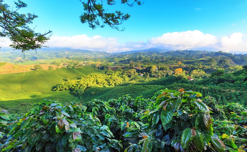 Kolumbia s vôňou kávy