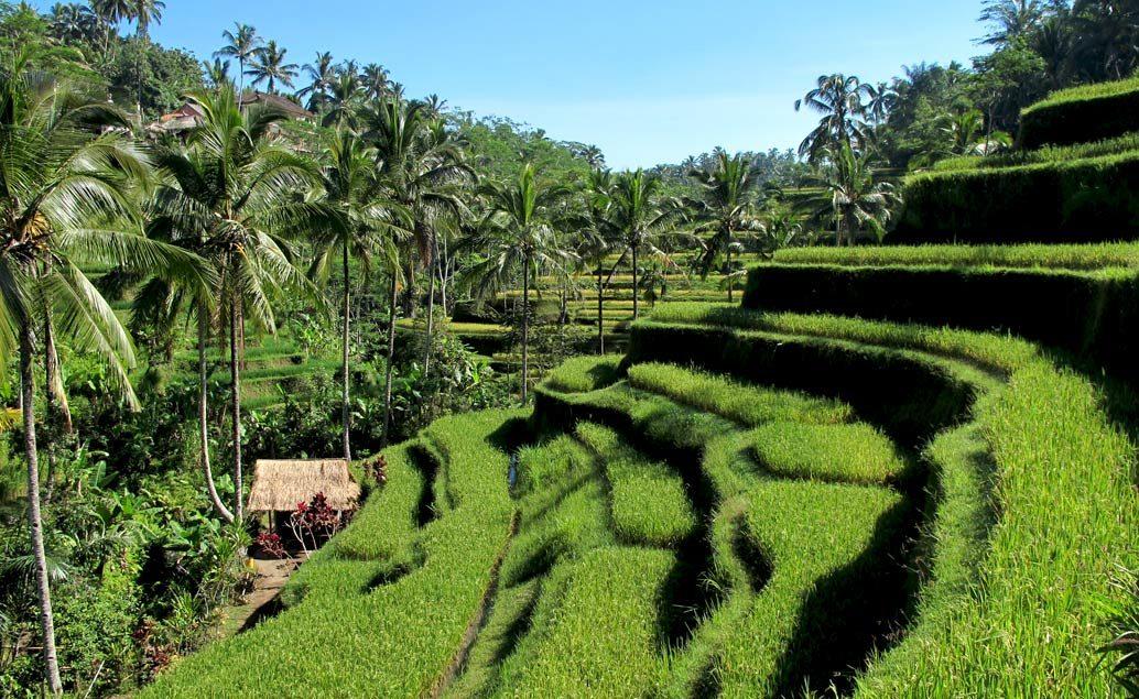 Zájazd perly Indonézie - Sumatra, Sulawesi, Bali