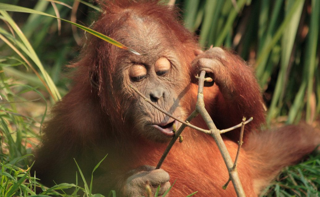 Zájazd Bali a Sumatra - exotika, slony a orangutany