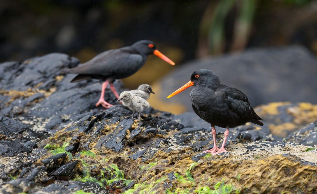Novozélandskou přírodou INDIVIDUÁLNĚ