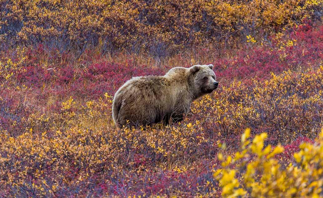 Cesta divočinou - Aljaška, Yukon, Britská Kolumbie