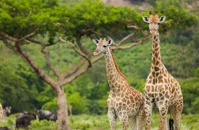 Safari Tanzánie a relax na pláži Zanzibaru