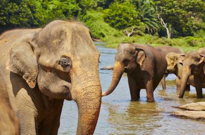 Kúzlo Srí Lanky a Maldív