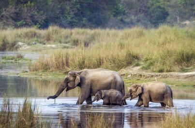 Nosorožci v Chitwan dobrodružne