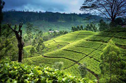 Zájazd Srí Lanka s českým sprievodcom