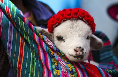 Mayský Yucatán a incké Peru individuálne