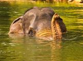 Bali a Sumatra - exotika, slony a orangutany
